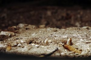 Half-Truism ash